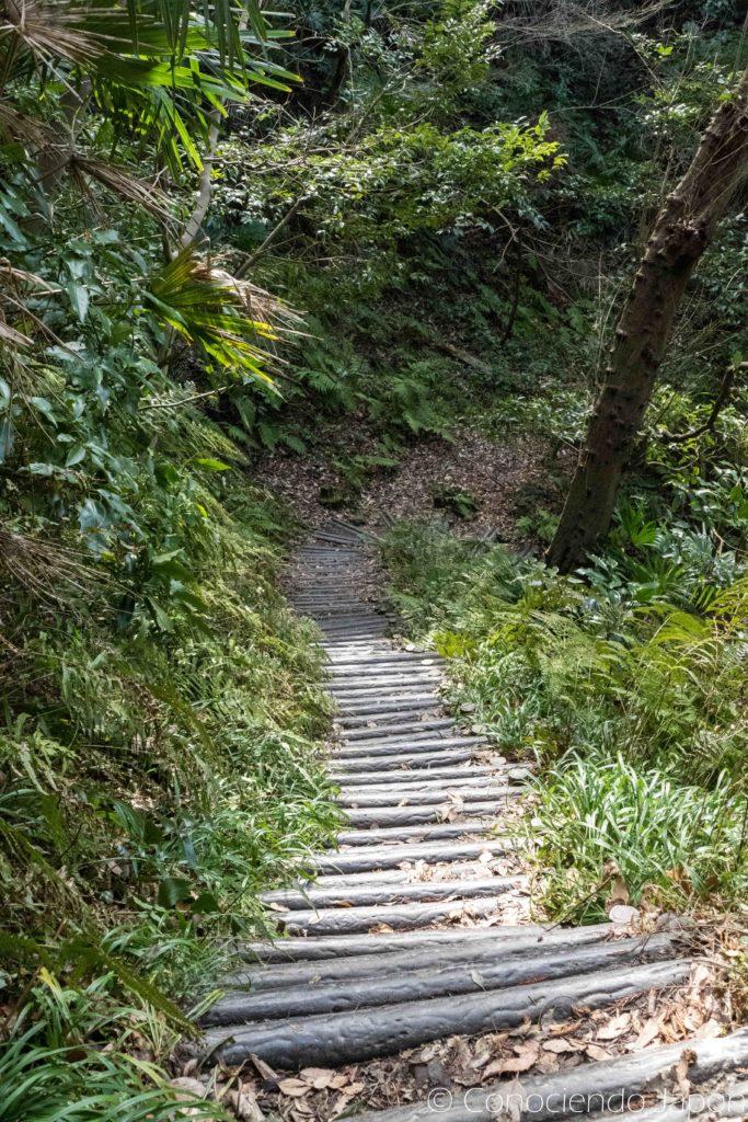 Camino en bosquecitos de Kamakura